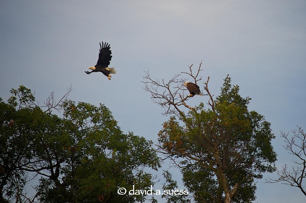 Sand Lake Eagles