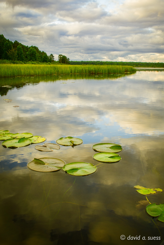 Lilly Pads and Reflections