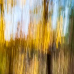 …yellow birch on Pine Lake